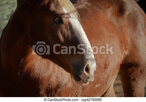 Horse - csp42780085