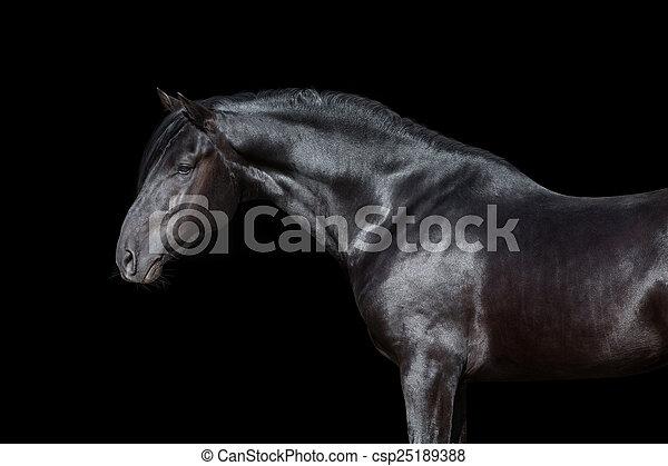 Horse portrait isolated on black csp25189388