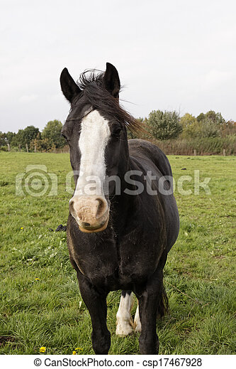 Horse portrait on a meadow, Germany - csp17467928