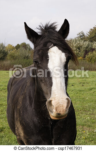 Horse portrait on a meadow, Germany - csp17467931