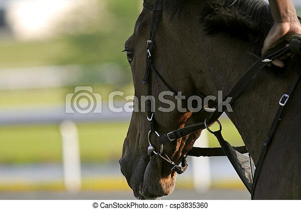 Horse Racing - csp3835360