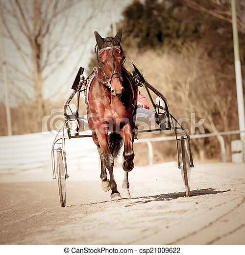 .horse, rennsport, geschirr - csp21009622