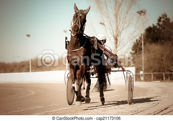 .horse, rennsport, geschirr - csp21173106