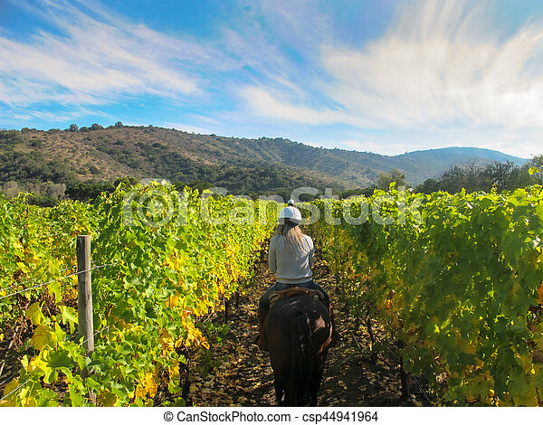 Horse riding in a Vineyard in Chile - csp44941964