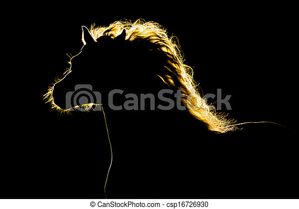 Horse silhouette isolated on black - csp16726930