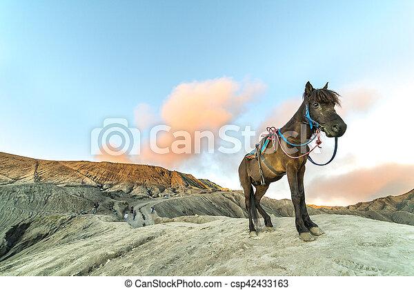 Horse - csp42433163