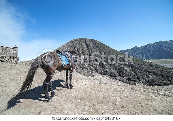 Horse - csp42433167