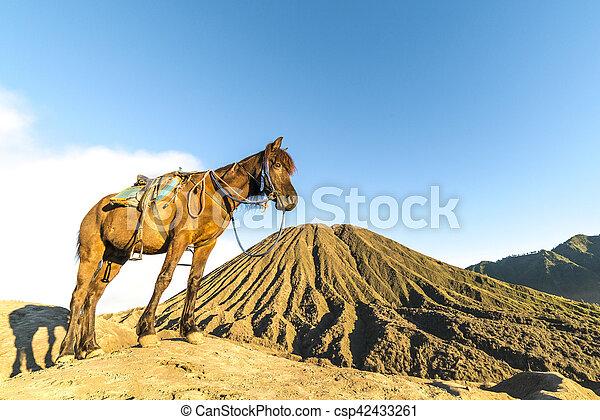 Horse - csp42433261