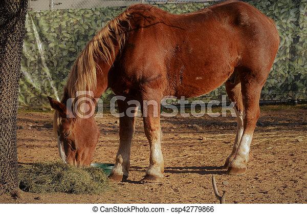 Horse - csp42779866