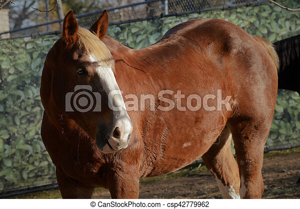 Horse - csp42779962