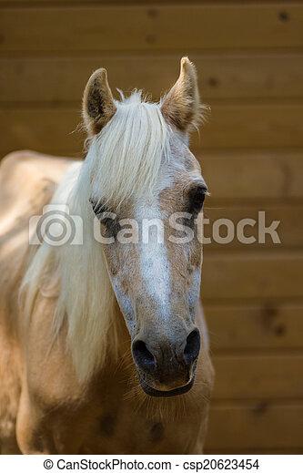 Horse - csp20623454