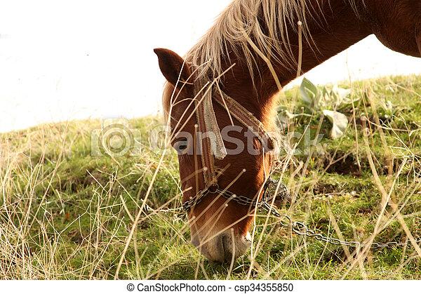 Horse - csp34355850
