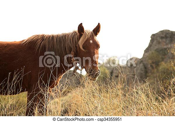 Horse - csp34355951