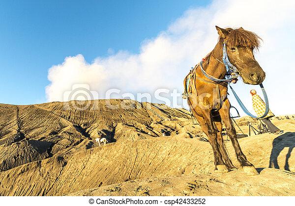 Horse - csp42433252
