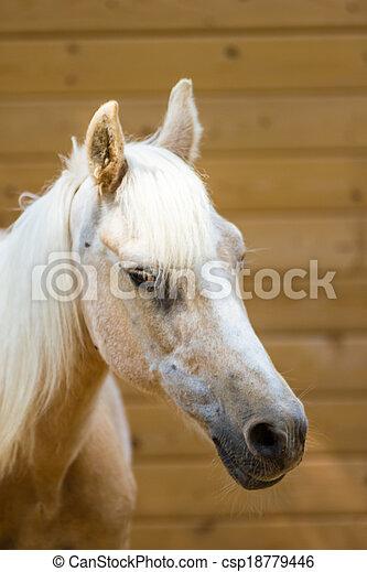 Horse - csp18779446