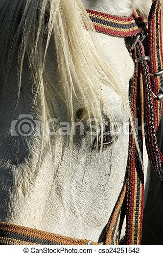 Horse - csp24251542