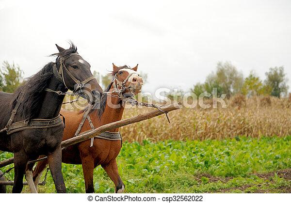Horse - csp32562022