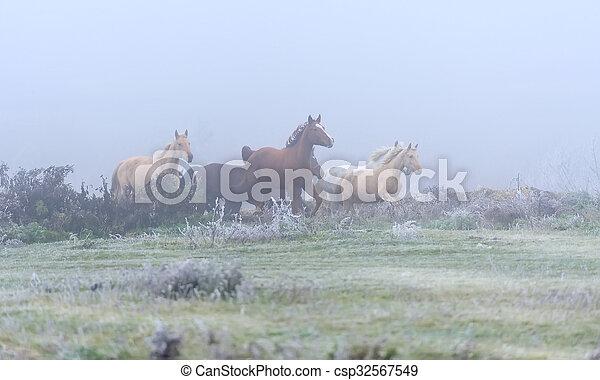 Horse - csp32567549