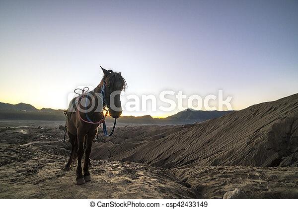 Horse - csp42433149