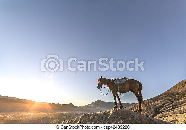 Horse - csp42433220