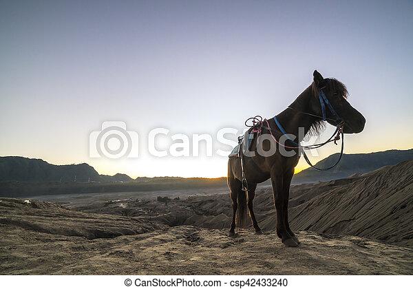 Horse - csp42433240