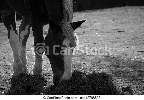 Horse - csp42788827
