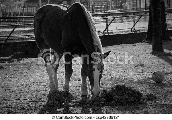 Horse - csp42789121