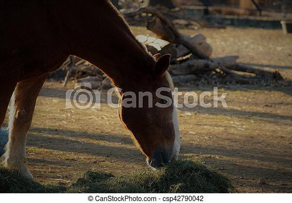 Horse - csp42790042