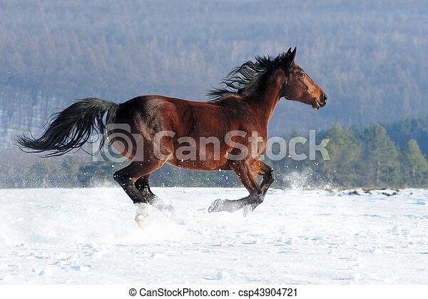 Horse - csp43904721