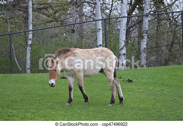 Horse - csp47496922