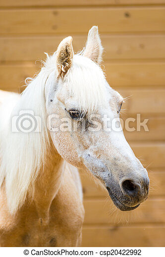 Horse - csp20422992