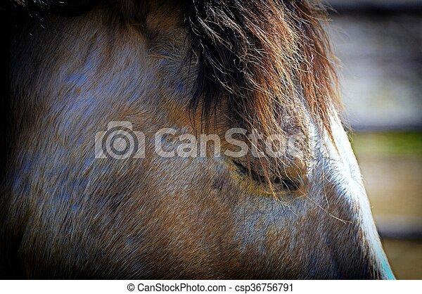 Horse - csp36756791