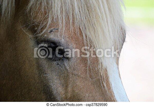 Horse - csp37829590
