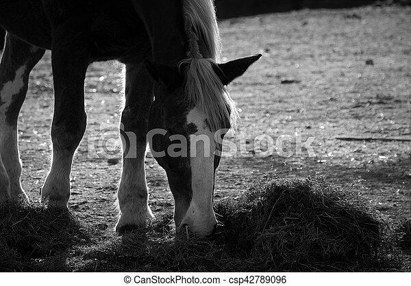Horse - csp42789096