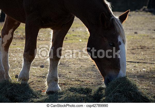 Horse - csp42789990