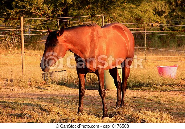 Horse - csp10176508