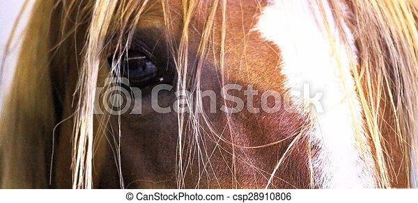 horse - csp28910806