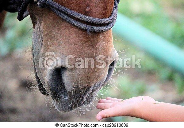 horse - csp28910809