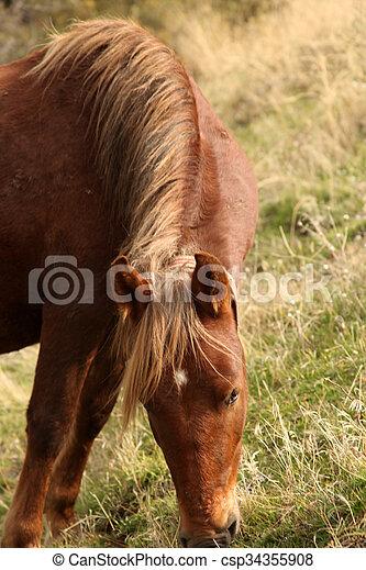 Horse - csp34355908
