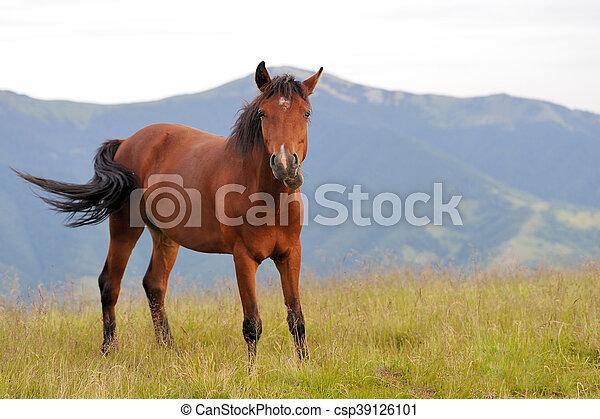 Horse - csp39126101