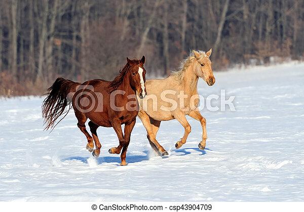 Horse - csp43904709