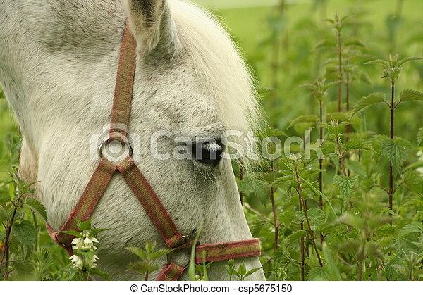 Horse - csp5675150