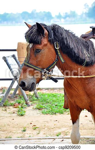 Horse - csp9209500