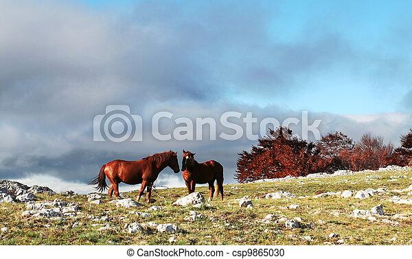 Horse - csp9865030