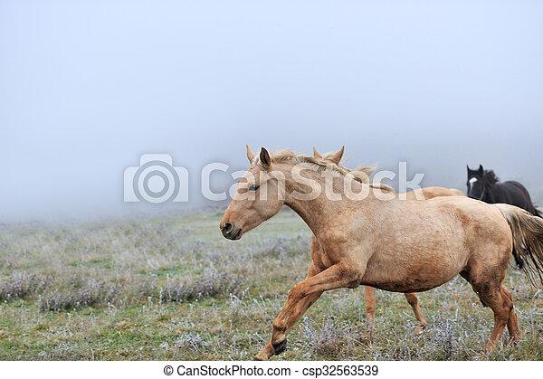 Horse - csp32563539