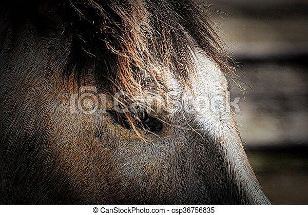 Horse - csp36756835