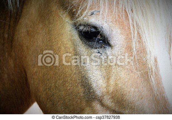 Horse - csp37827938