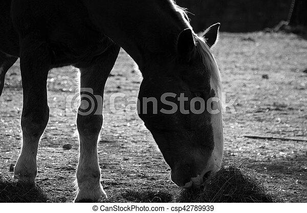 Horse - csp42789939