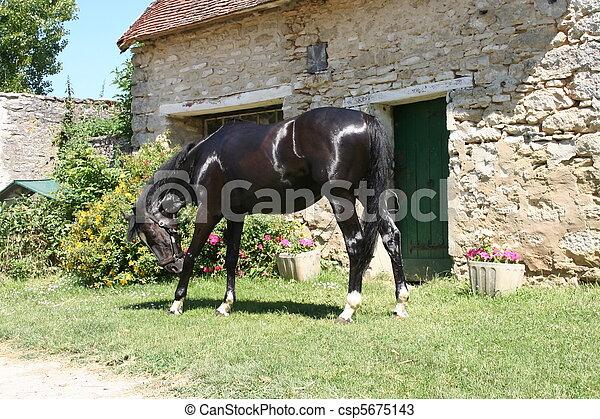 Horse - csp5675143