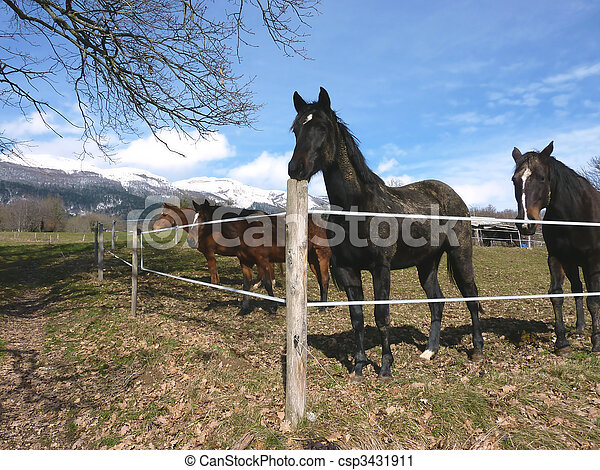 Horses behind a fence - csp3431911